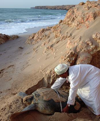 _36539_Oman_environment