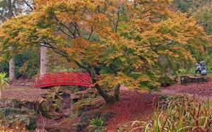 autumn-gardens-bat_2032543b