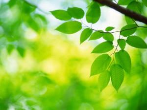 Plants_in_Sunlight