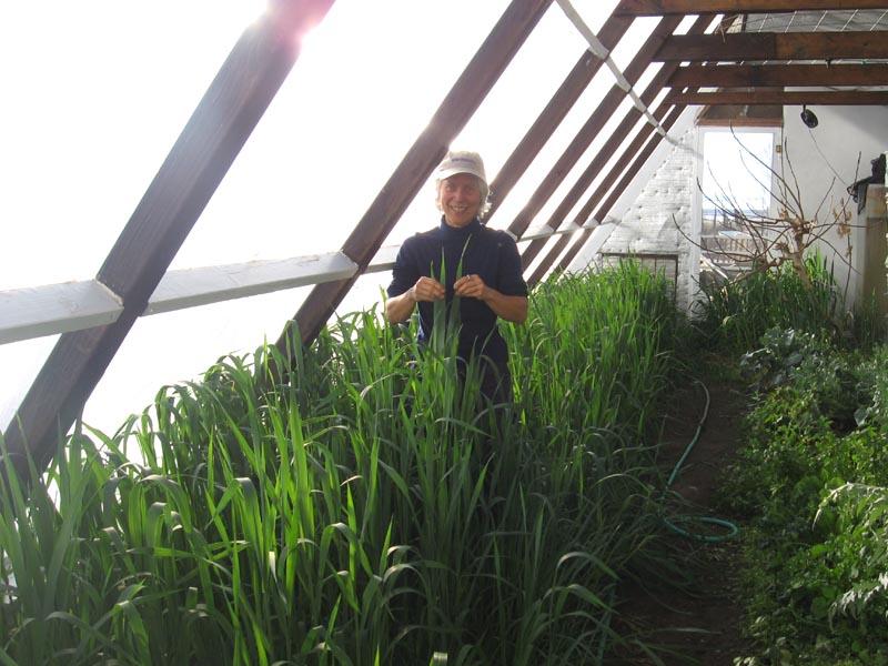 the year round solar greenhouse pdf