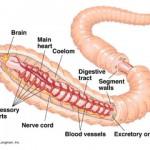 earthworm-interior