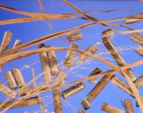 switchgrass-biofuel