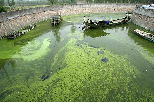 algae-biofuel