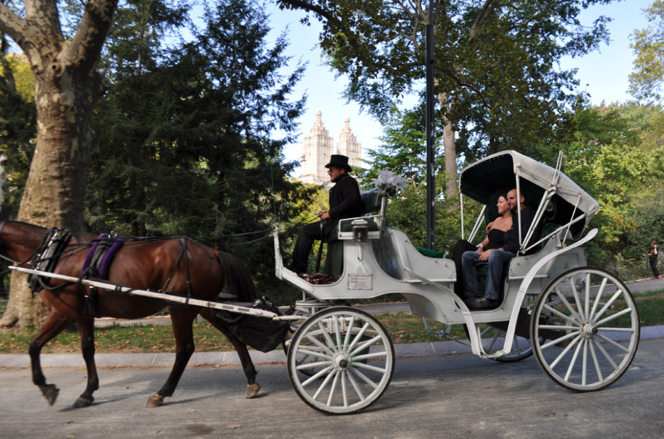 wait no more horse carriage rides in new york city 39 s central park the green optimistic. Black Bedroom Furniture Sets. Home Design Ideas