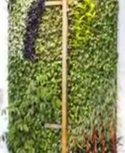 Sustainable Design, Captured World's Tallest Vertical Garden