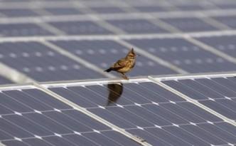 bird-solar-panel