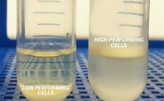 Oil producing yeasts  © 2014 The University of Texas at Austin