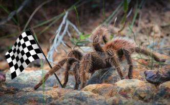 Fast-tarantulas