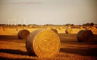 Hay biofuels