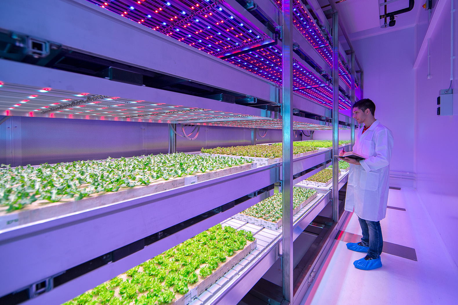 Philips Opens World S Largest Indoor Farming Facility In