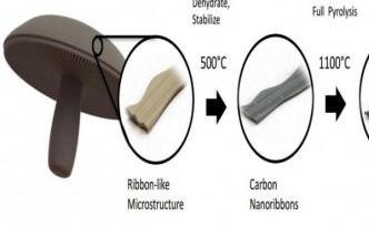 Scientists-use-portabellas-to-make-more-durable-batteries