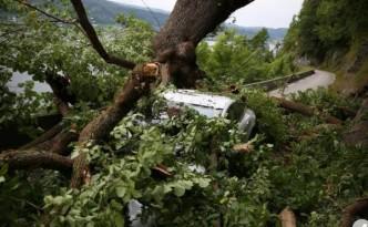 tesla-model-s-crushed-tree