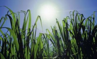 how-solar-energy-works-growing-plants