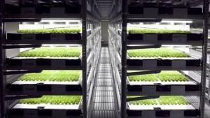 Spread-vertical-farm-trays_jpg_662x0_q70_crop-scale