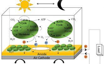 Bacteria Solar Cell
